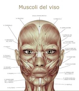 muscoli-viso-visotonic